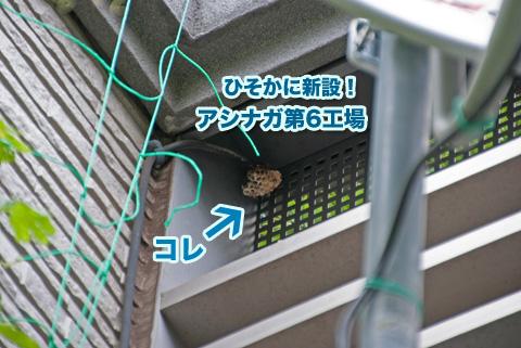 ashinaga3_082413