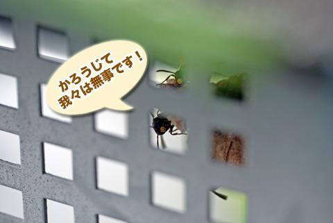ashinaga4_082413