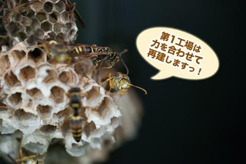 ashinaga5_082413