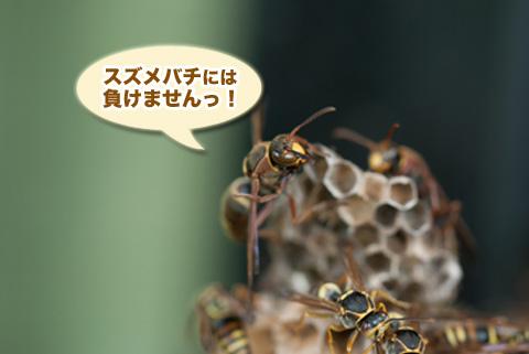 ashinaga6_082413