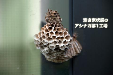 ashinagabachi_083113