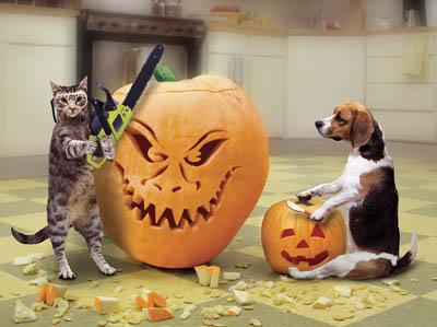 cat_halloween