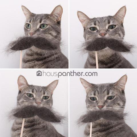 MoustacheCats