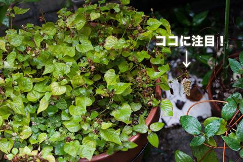 tsumaguro1_100513