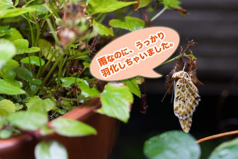 tsumaguro2_100513