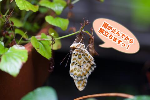 tsumaguro3_100513