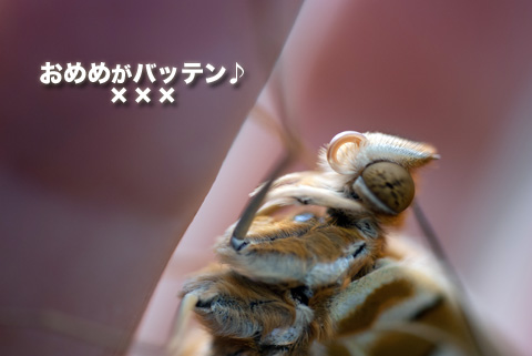 tsumaguro4_091413