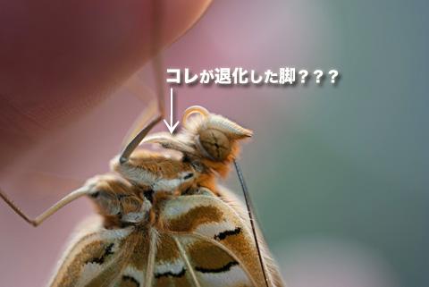 tsumaguro6_091413
