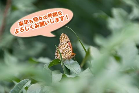 tsumaguro7_091413