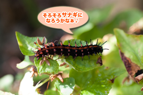 tsumaguro_youchuu_091413