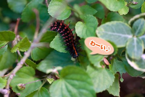 tsumagurohyoumon1_090913
