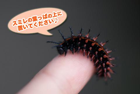 tsumagurohyoumon2_090913