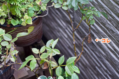 tsumagurohyoumon3_090913
