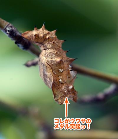 tsumagurohyoumon4_090913