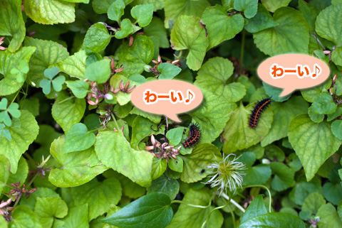 tsumagurohyoumon5_090913