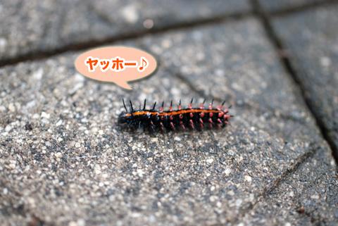 tsumagurohyoumon_090213