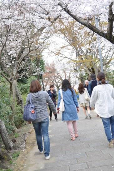 2013京都お花見5