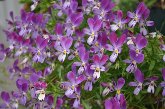 庭の花12