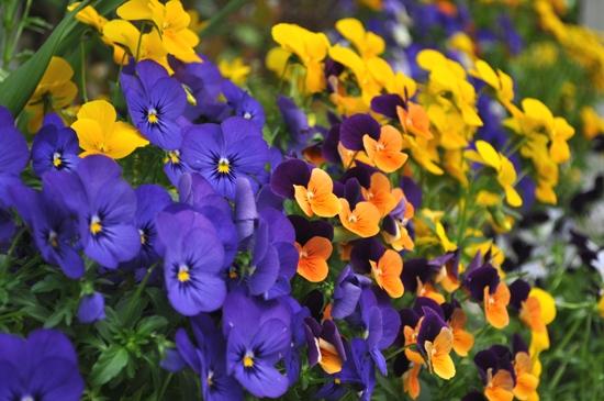 庭の花14