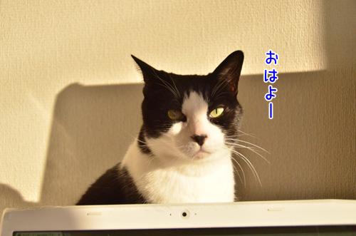DSC_2524_2.jpg