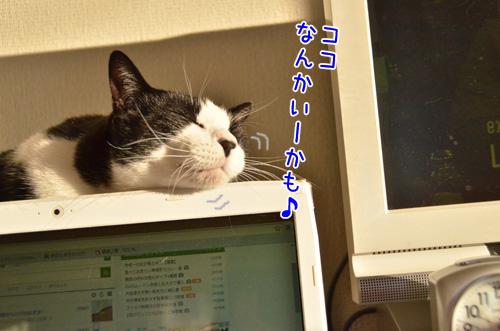 DSC_2531_2.jpg