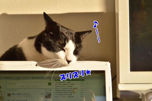 DSC_2539_2.jpg