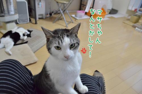 DSC_2809_2.jpg