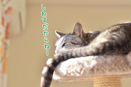 DSC_3014_2.jpg