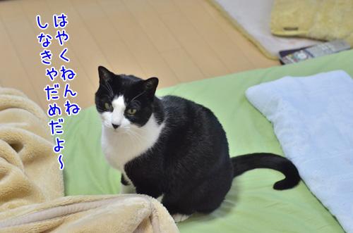 DSC_3306_2.jpg
