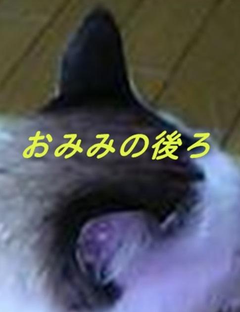 ai 027