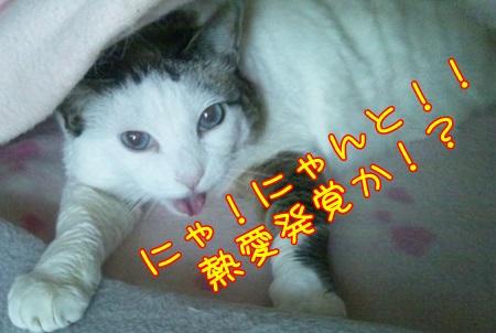 DSC_0176_20141113142411fdb.jpg