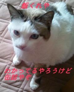 DSC_mesi.jpg