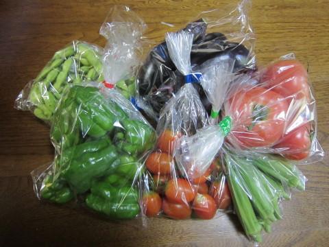 h25,8夏本番ー野菜