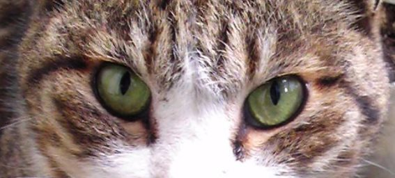 Ichiro-eyes.jpg