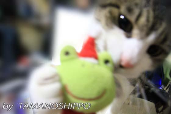 おもちゃを欲しがる猫
