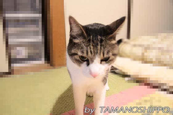 朝のあいさつをする猫