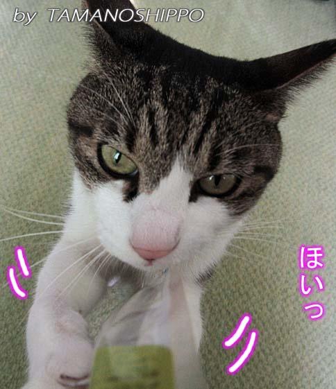 またたびを捕まえる猫