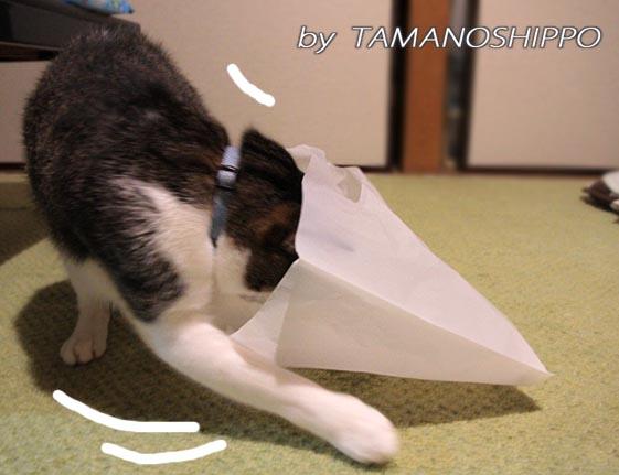 袋に入ろうとする猫