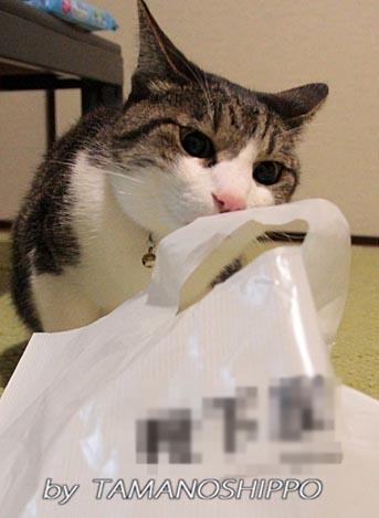 袋が気になる猫