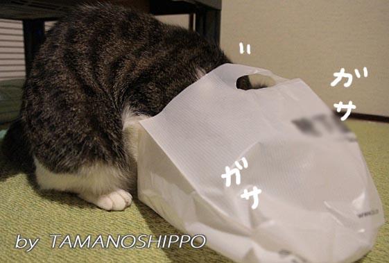 袋に入るネコ