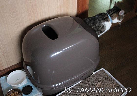 猫・トイレ姿