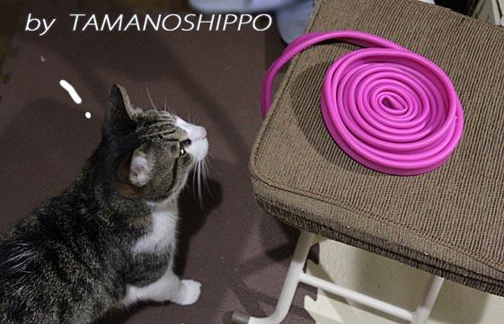 チューブに興味を示す猫