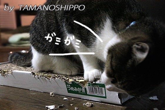 爪とぎを噛む猫