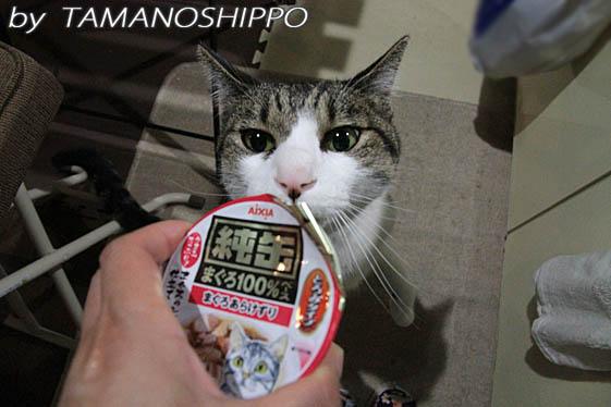 黒缶をクンクンする猫
