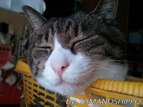 ひとりで寝てる猫2011928