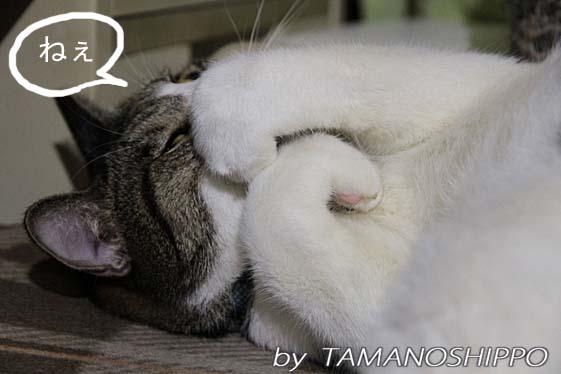 おねむ猫2655