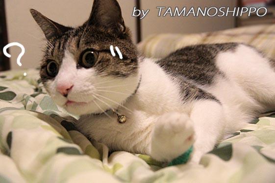 ビビる猫6136