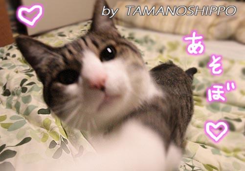 甘えてくる猫6131