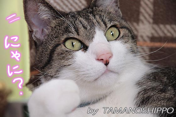 呼び声に反応する猫5068