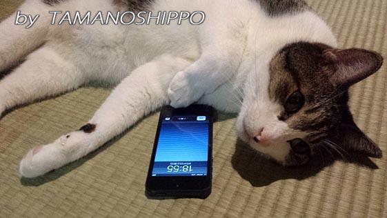 猫とスマホ20130831
